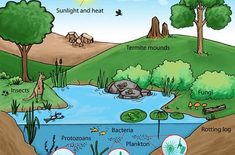 mô hình Vườn rừng sinh thái, nông nghiệp tự nhiên và hữu cơ