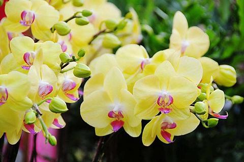 Chọn hoa lan chơi tết và những điều cần biết