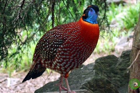 Tìm hiểu về các loài gà độc đáo và quý hiếm tại Việt Nam
