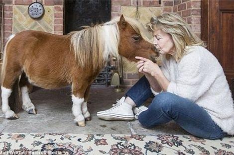 Những lý do khiến bạn nên nuôi thú cưng