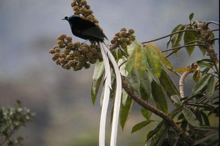 Một số loài chim đuôi dài tuyệt đẹp không thể bỏ qua